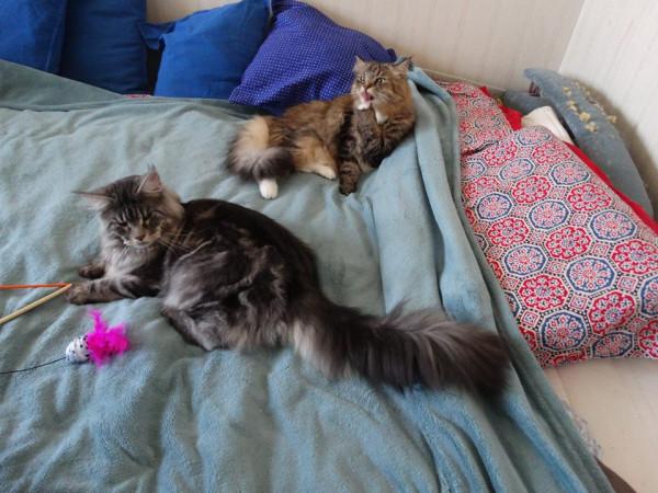 Два кота3