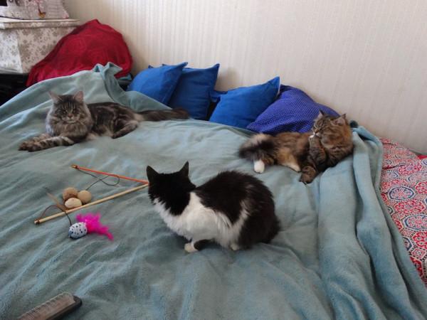 Три кота1