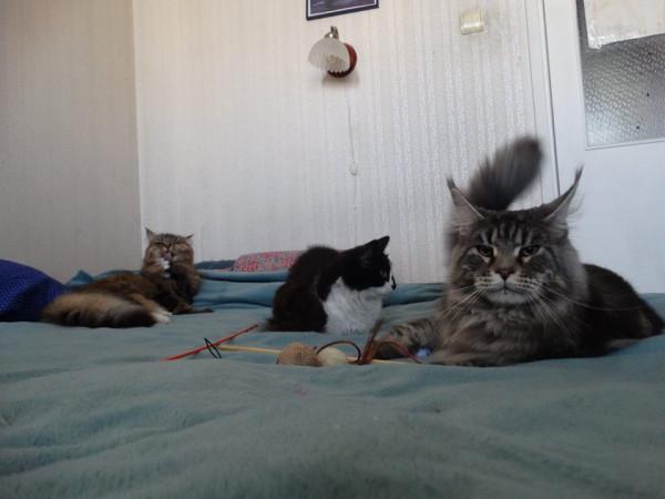 Три кота2