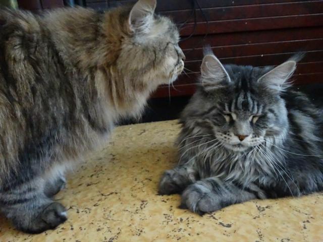 Каспер и Ластик
