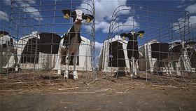 Имиджевый фильм агропромышленного холдинга «Молочный продукт»