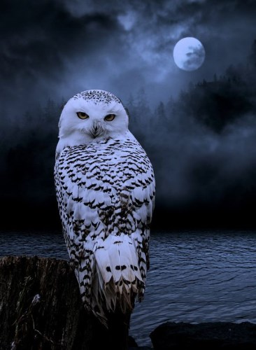 Snowy Owl by Moonlight