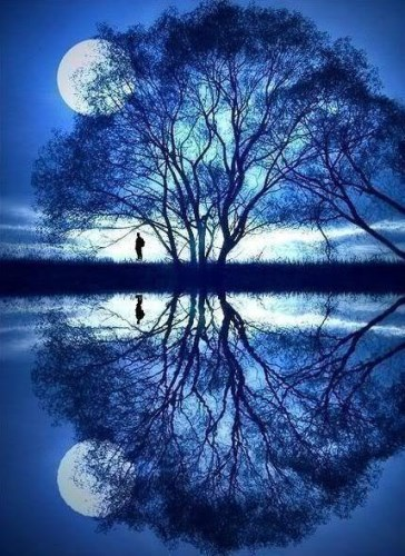 Reflected Tree Blue