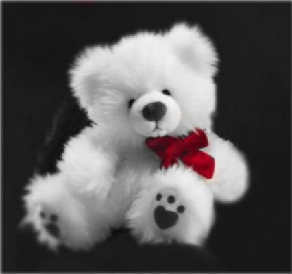 White Teddy on Black
