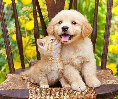 Puppy & kittie