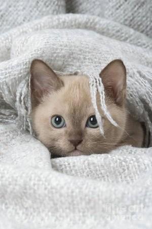 Cute kitty (300 x 450)