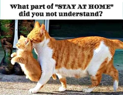 Ginger cat telling kitten off (500 x 384)