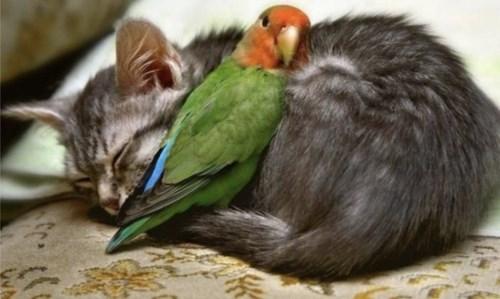Kitty & parrot