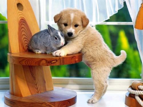 Puppy & rabbit