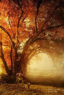 Tree & haze