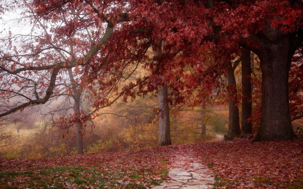 Red Trees & Leaves