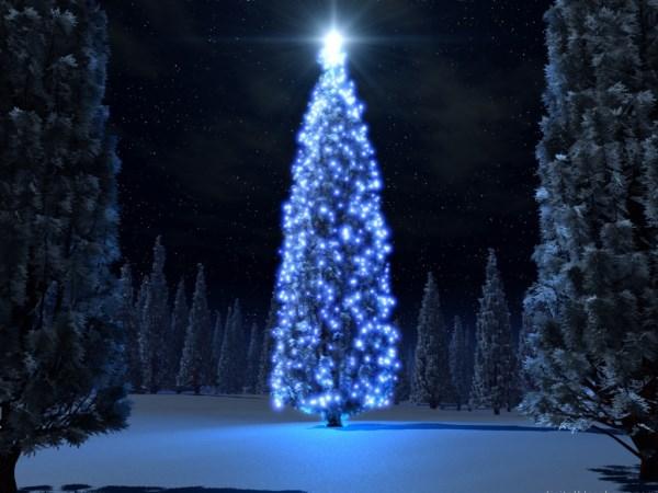 Blue Tree & snow