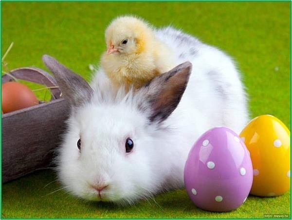 85063-Easter-Bunny-Chick-And-Bunny