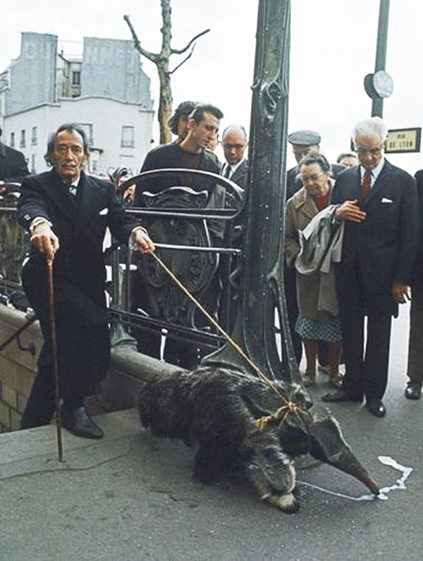 dali-and-pet-anteaters