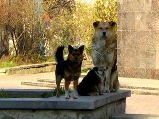 Внимание собак