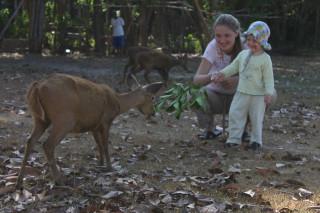 Малолетняя Вера гоняет оленей