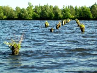 пруд, где были мостки
