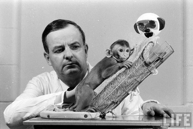 Про Гарри Харлоу и его эксперименты над обезьянами 1