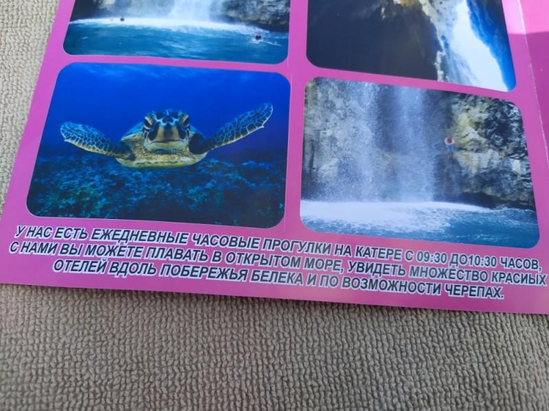 и по возможности черепах