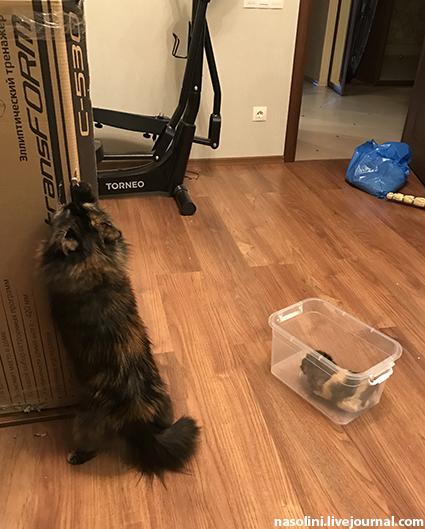 Травоядная кошка