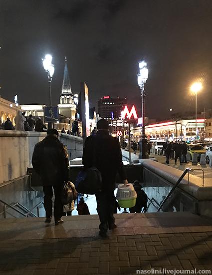 Кошка Софи в Москве