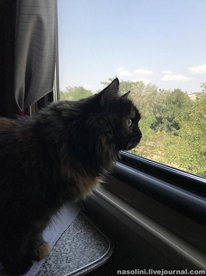 Кошка Софи едет поездом в Анапу