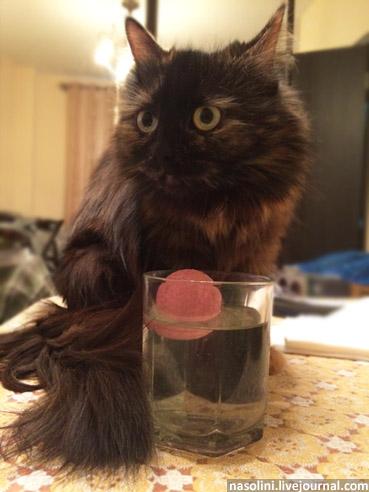 Кот полоскает