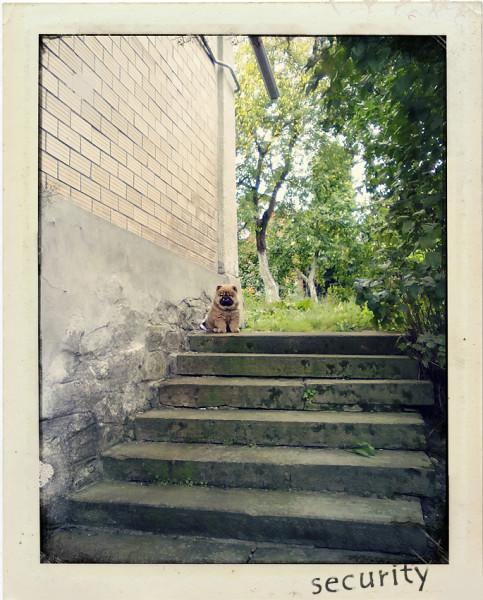 fzm-Polaroid.Frame-16