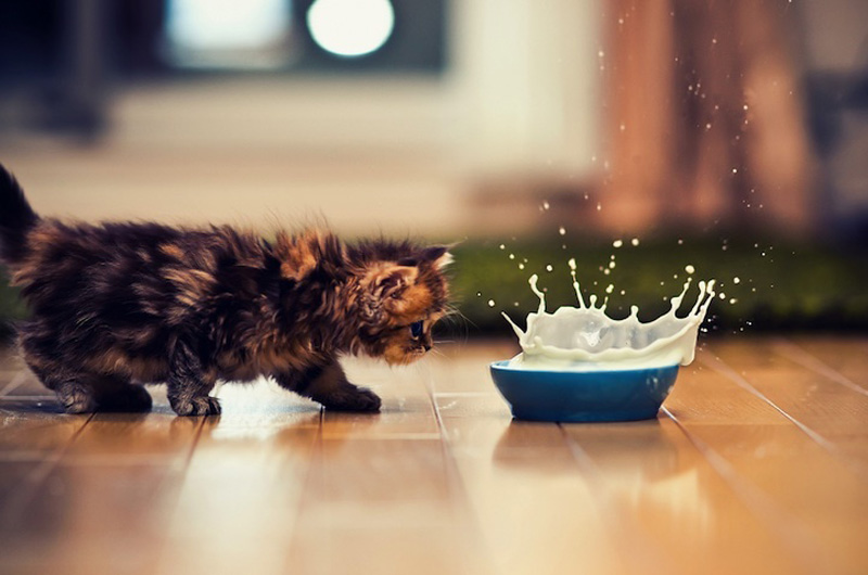 kitten-15