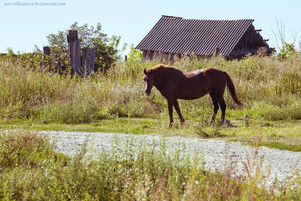 Домики в глубинке Ульяновской области (фото) - фото 4