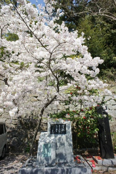 Сакура1