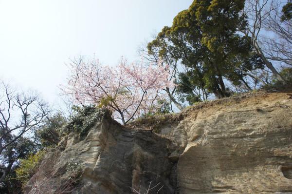 Слива на скале
