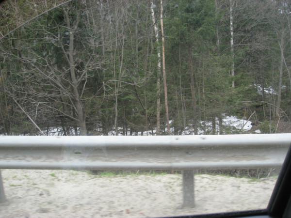 Снег в лесу  4 мая!