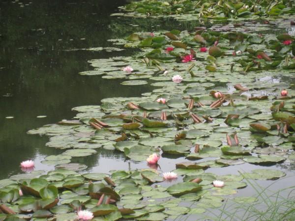 Водный сад марченко