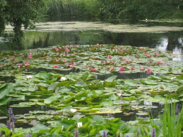 Водный сад марченко 016