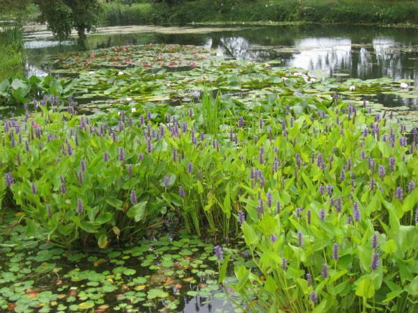 Водный сад марченко 015