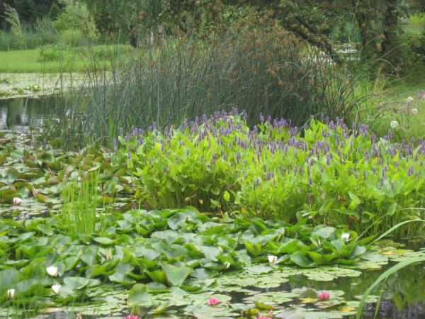 Водный сад марченко 025