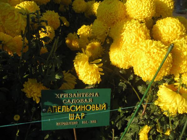 Крым2008 отпуск 041