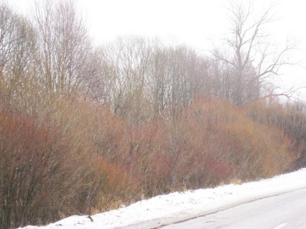 Цвет зимой 1