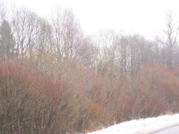 Цвет зимой 5