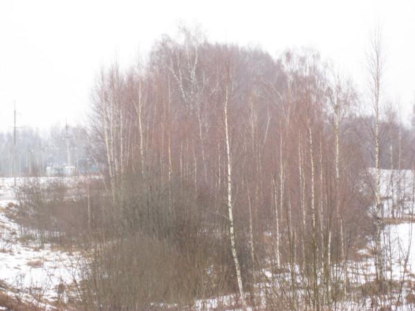 Цвет зимой 6