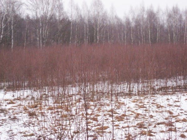 Цвет зимой 3