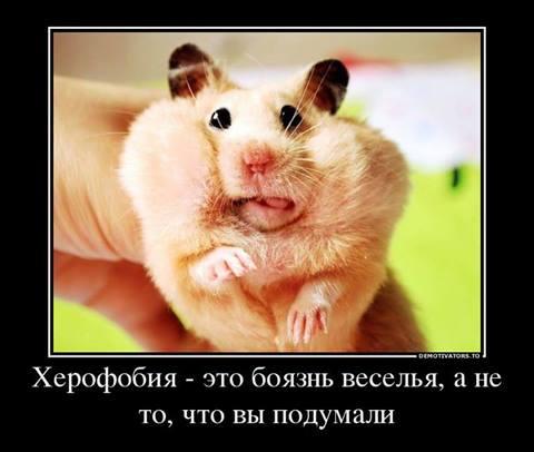 988663_525567374173220_563804310_n