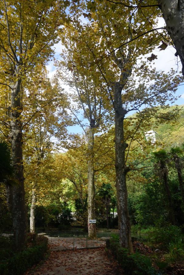 Приморский парк в Гагре в запустении