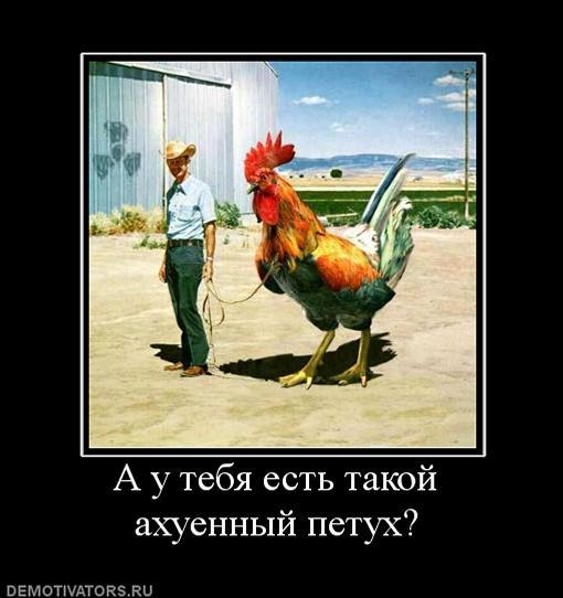 626407_a-u-tebya-est-takoj-ahuennyij-petuh