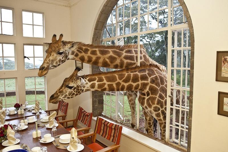 giraffe-manor-hotel-nairobi-kenya-africa-safari-9