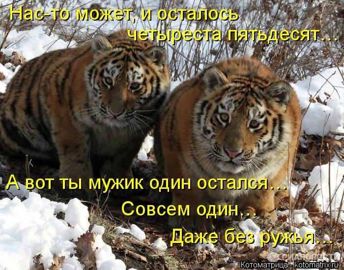 kotomatritsa_j2
