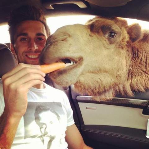верблюд1