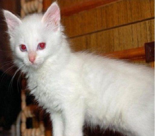 альбино2
