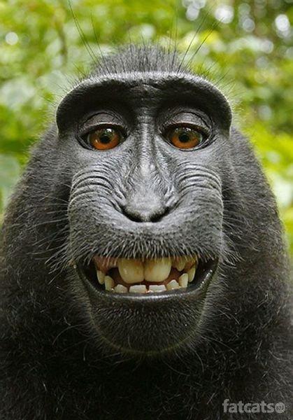 голивудская улыбка